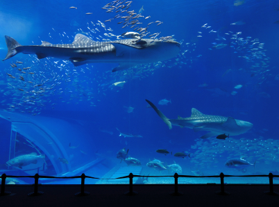 Shopping for Leaders in the Shark Tank: What Leadership Qualities Do You Value?